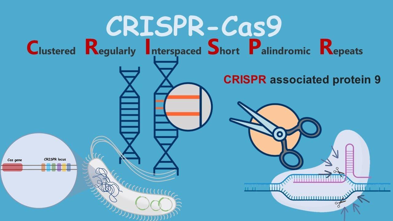 CRISP-Cas9 hakkında